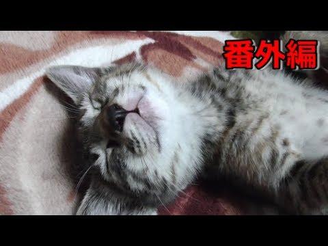 【番外編】カメラが気になる双子&ウトウト・熟睡する双子