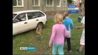 В Иркутске всем двором спасали кота с дерева