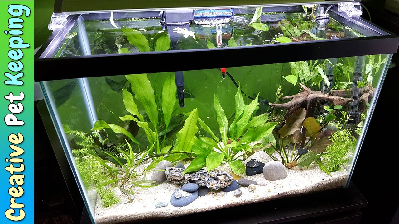 Great HOW TO Setup A 20 Gallon Planted Aquarium 🌱🌿💧 Substrate And Supplies
