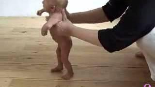 Stepping reflex