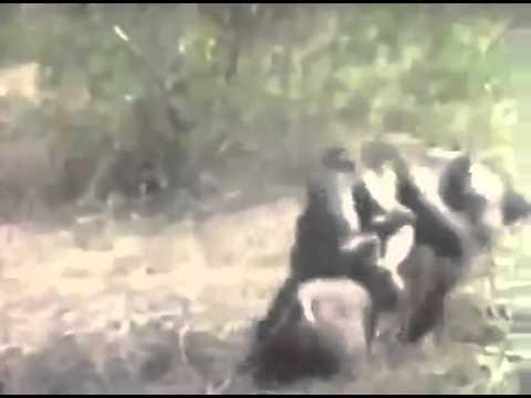 猿人襲地球之猩B崛起2 - YouTube