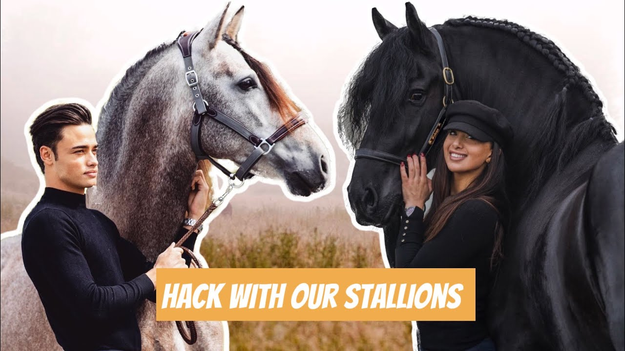 PRE STALLION AND FRIESIAN STALLION RACE ON A HACK