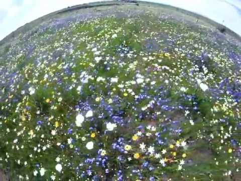 DARLING FLOWER SHOW 2011.avi