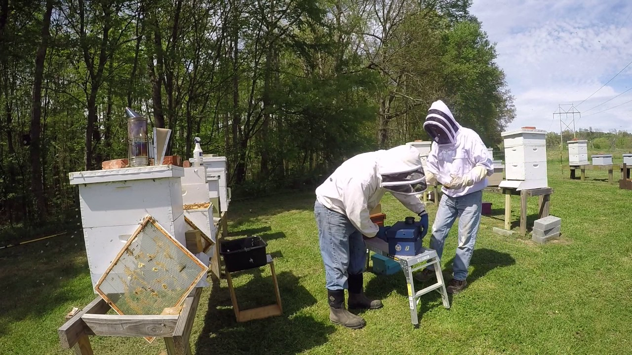 Beekeeping- Installing Queen Cells And Bees In Mini Mating Nuc Boxes