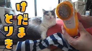 【毛玉取り器「とるとる」】バリバリ音がきもちいいぃぃ!子猫の前で毛玉を取ってみた結果…【はがね先生】 thumbnail