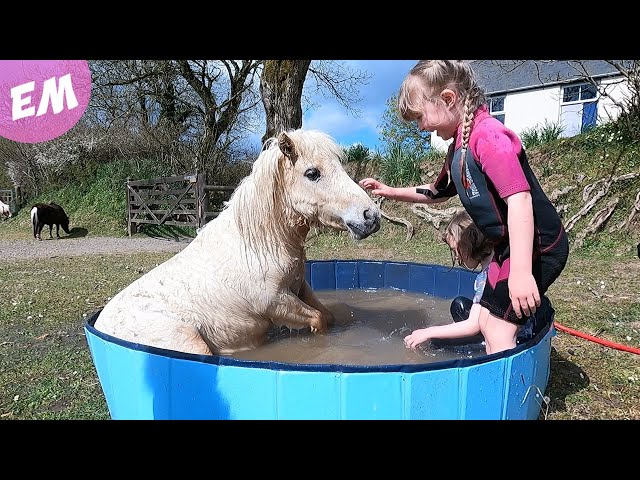 Pony Crashes the Pool Party!