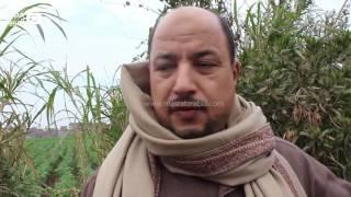 مصر العربية | جزيرة الوراق .. بين الموت والحياة