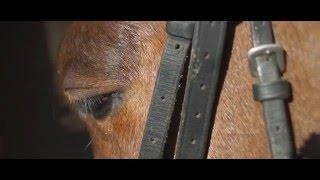 Pferde Dokumentation | Rennpferd Gunning For Glory | Dokumentation Kurzfilm-Doku Teil 1
