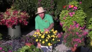 Plants and Flowers: 2013 Standout Performers - Part 1