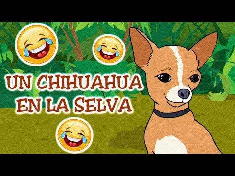 Un Chihuahua En La Selva