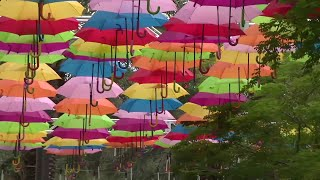 Umbrella Sky Project unveils over Giralda Plaza in Coral Gables screenshot 3