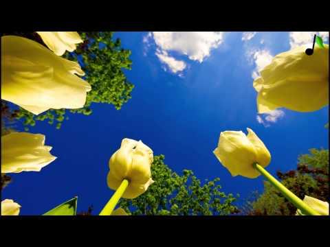 Bob Sinclar - See Line Woman (JackLNDN Remix)