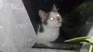 Кот на окне и просит в дом и ему холодно