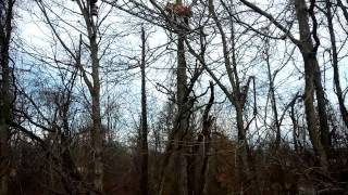 Fireman save cat with ladder in tall tree! Amazing