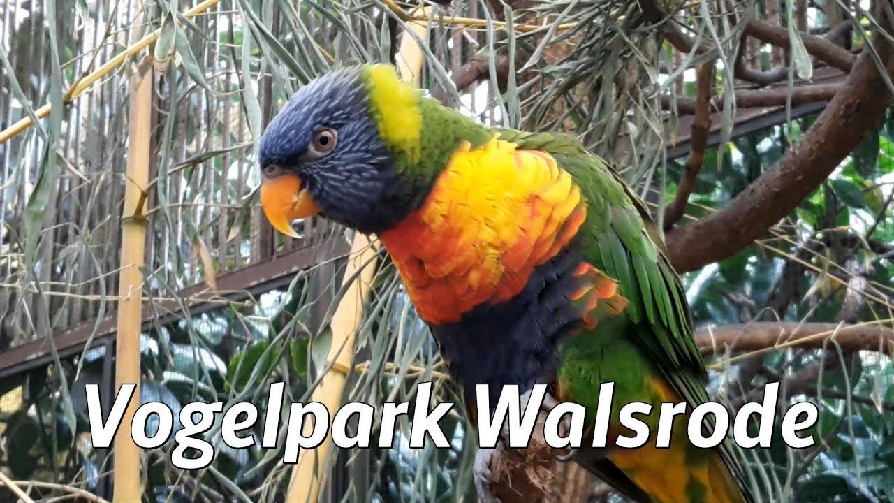 vogelpark walsrode youtube. Black Bedroom Furniture Sets. Home Design Ideas