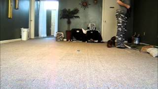 South Florida Dog Training Bootcamp- Bella Obedience Training Cincinnati Dog School
