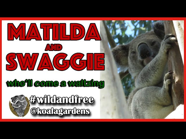 Matilda and Swaggy - who'll come a waltzing?