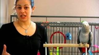 How to Train a Parrot : How to Potty Train a Parrot