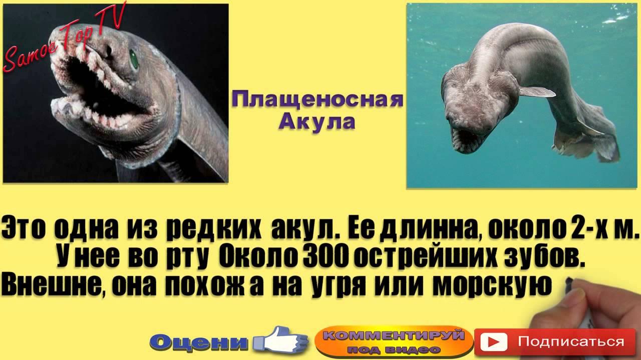 Самые Страшные МОРСКИЕ ЧУДОВИЩА (Топ-6) - Самое ТОП ТВ