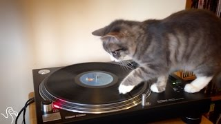 Cat Discovers He's An Excellent DJ