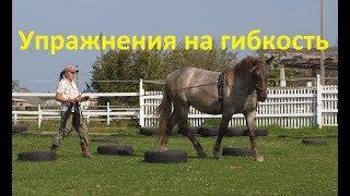 Лошадь не гнётся! Что делать?