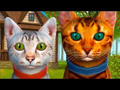 Вопрос: Приспособлены ли домашние коты к проживанию в лесу?