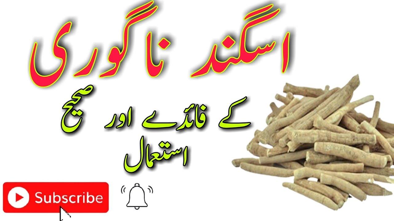 Download Asgandh nagori || Ashwagangdha || ashwagandha ky fayde for man and woman in urdu/hindi