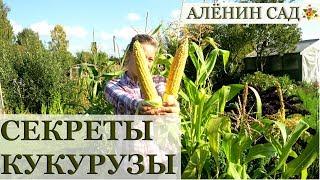 видео Что посадить на даче: минимум ухода, овощи, многолетники
