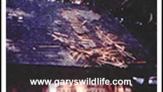 Boston Get Rid Of Skunks-call (508) 946-0060- Gary's Wildlife