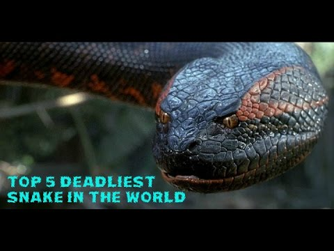 Top 5 Deadliest Snake In The World #2017 - YouTube