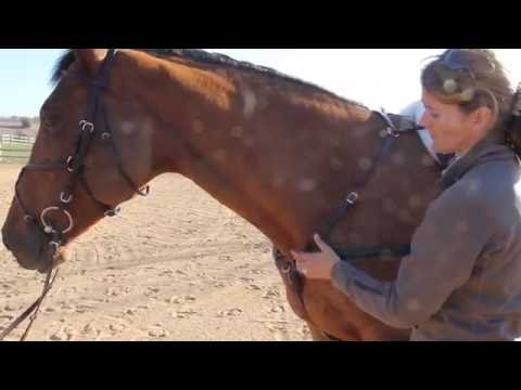 Robin Moore & the Amerigo Custom Combination Breastplate