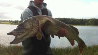 Huge Pike