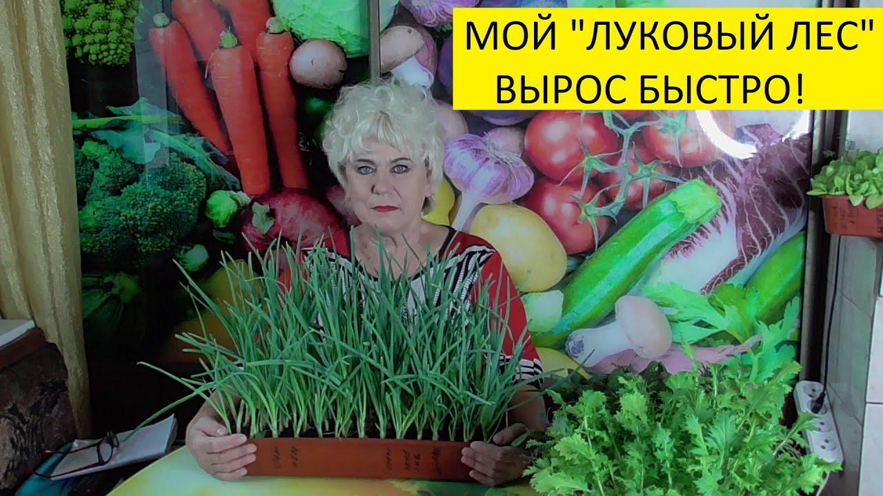 ЗИМНИЙ ОГОРОД. НАЧИНАЕМ С ЛУКА. Ольга Чернова.