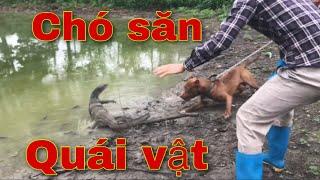 Cùng Chó Săn Thu Phục Quái Thú   Săn Bắt Ẩm Thực Vùng Cao