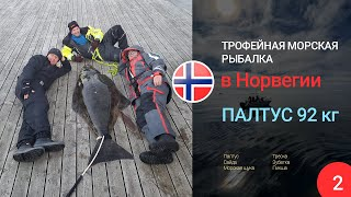 Трофейный палтус Трофейная морская рыбалка в Норвегии часть 2 Треска сайда палтус зубатка