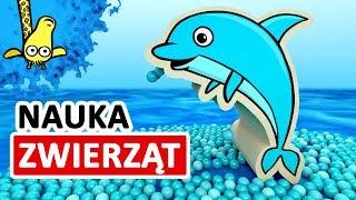 Nauka zwierząt podwodnych - Kształty zwierząt pod wodą dla dzieci   CzyWieszJak
