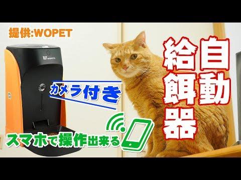 スマホで操作出来るカメラ付き自動給餌器 犬・猫 の開封と初期設定レビューWOpet[4K]