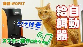 スマホで操作出来るカメラ付き自動給餌器(犬・猫)の開封と初期設定レビュー!【WOpet】[4K] thumbnail
