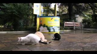 Бездомные кошки на пляже Ривьера во время шторма