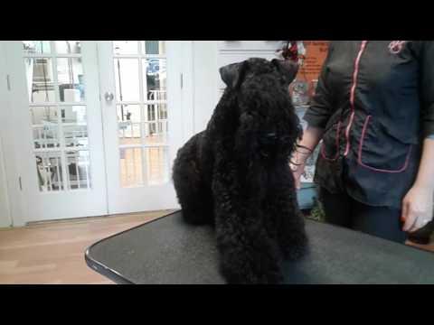 Dog Training at VIP Pet