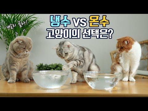 더운날 시원한 냉수냐? 이열치열 온수냐? 고양이들의 선택!