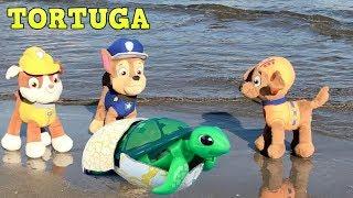 Patrulla canina español y paw patrol bebes salvan tortuga de juguete en playa.Nuevo video cachorros
