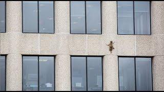 Raccoon's Minnesota skyscraper climb. (BBC News Telugu)