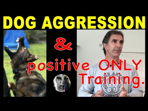 Dog Aggression and Positive ONLY Training - Robert Cabral Dog Training Video