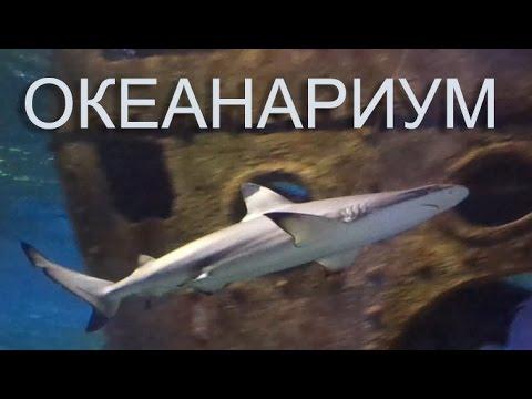 Купить аквариум в Санкт-Петербурге: огромный выбор! - YouTube