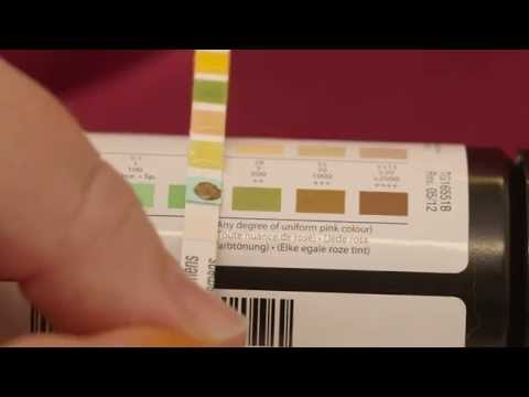 how-to-test-your-cat's-urine-for-substances-like-glucose-and-ketones