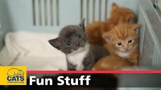 Kittens growing up! thumbnail