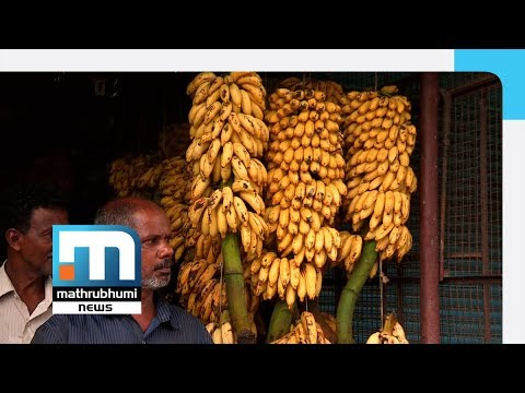 Nipah Scare: Fruit Market In State In Crisis| Mathrubhumi News