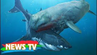 Quái vật cổ đại có khả năng giết cả siêu cá mập Megalodon