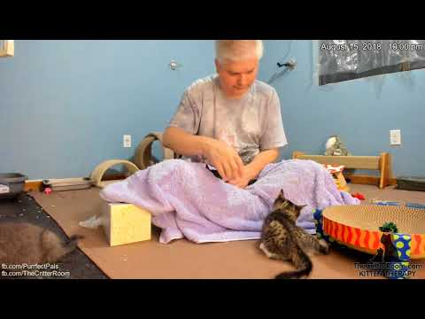 Five Guys Kittens - Evening 2018-08-15